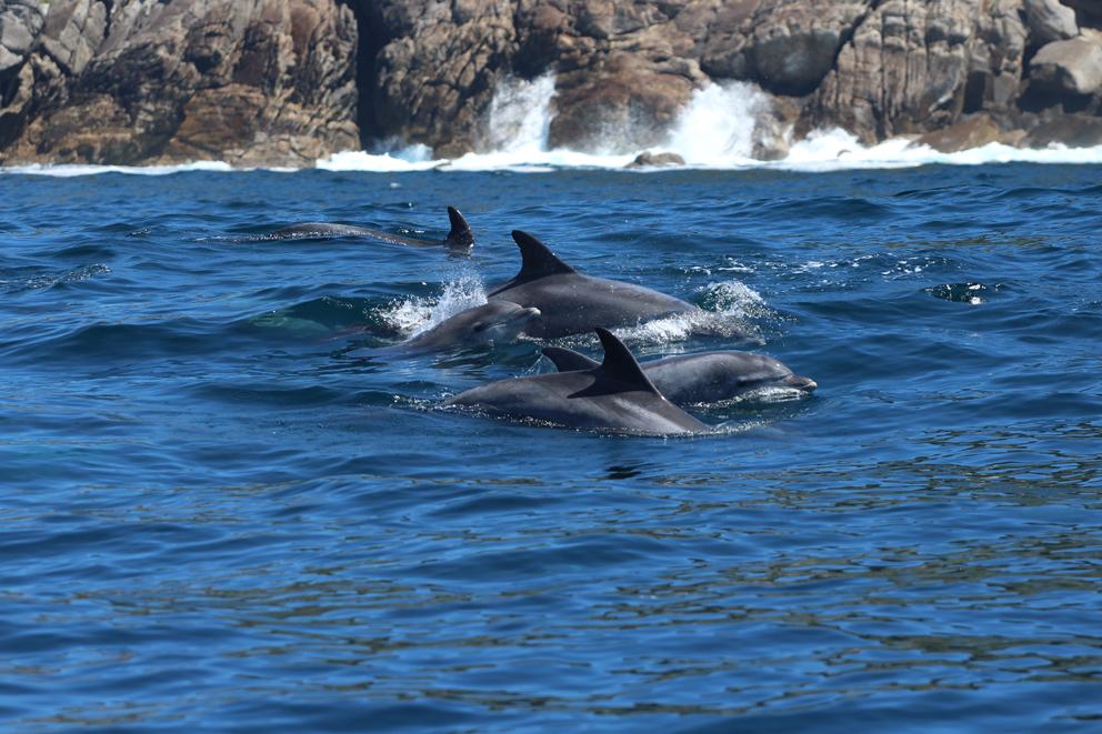 Delfín proyecto VIRADA